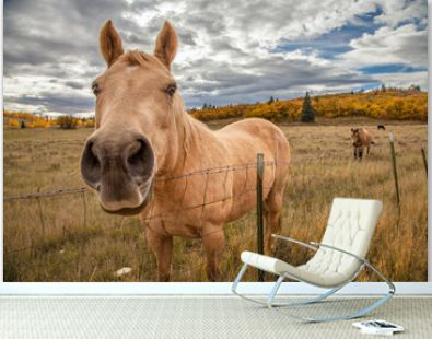 Funny horse in fall