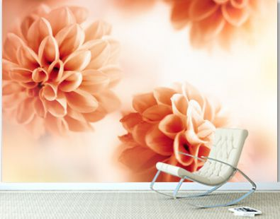 Autumn floral composition made of fresh dahlia on light pastel background. Festive flower concept with copy space.
