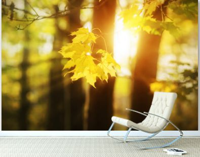 A branch with yellow maple leaves is illuminated by rays of bright warm sunlight on an autumn day. Season.
