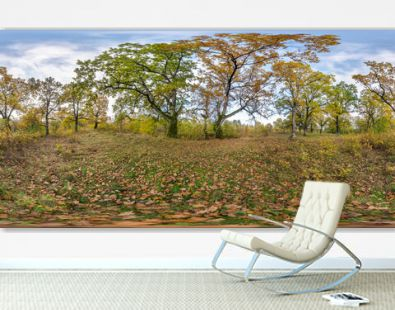 full seamless spherical hdri panorama 360 degrees angle view of beautiful landscape in oak grove with clumsy branches in gold autumn in equirectangular projection, ready VR AR content