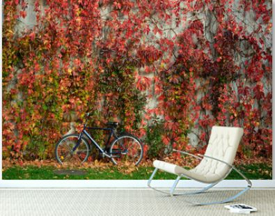 wall covered with yellowed ivy and a bicycle