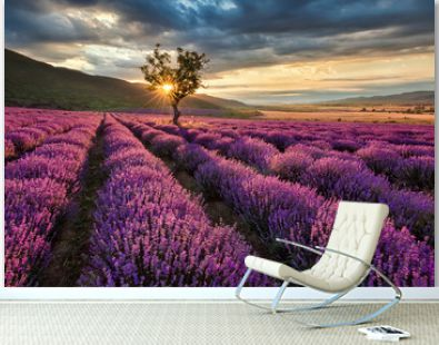 Stunning landscape with lavender field at sunrise