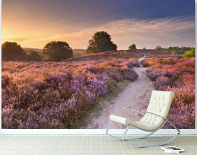 Path through blooming heather at sunrise in The Netherlands.
