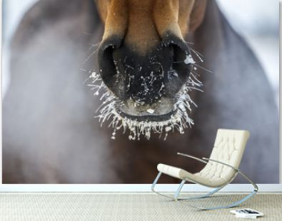 Horse's nose with the ice and steam