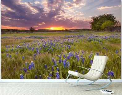 Bluebonnets blossom under the painted Texas sky in Marble Falls, TX
