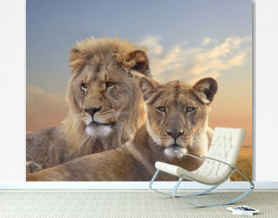 Pair of African Lions Resting at Sunset