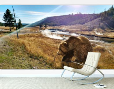 Close up Bear in Yellowstone National Park