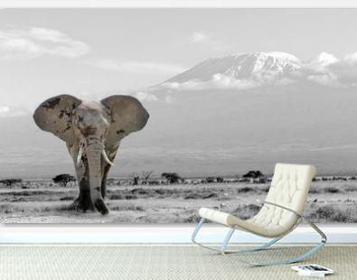 Black and white photography with color elephant
