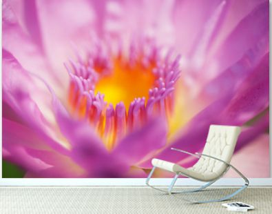 close up of beautiful blooming lotus flower background.