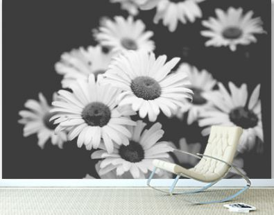 Bunch of black and white daisies