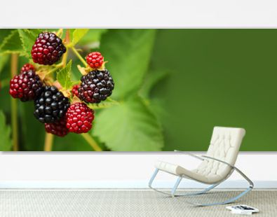 Fresh blackberry (Rubus fruticosus) on a branch in the garden. Add healthy and tasty fruit to your diet. Dietary and vegetarian product. Selective focus, copy space, side view. Banner.