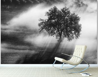 Single olive tree in the beautiful sunny fog at sunrise, natural background with sun rays through the mist