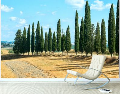 Classic Tuscan landscape with cypress trees in the summer sunny day. Colorful summer view of Italian countryside
