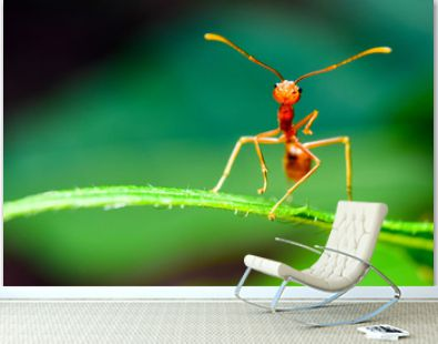 The ant stands on the leaf graceful gesture.