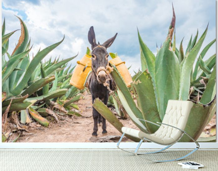Beautiful Donkey at the Maguey fields in Tlaxcala, Mexico