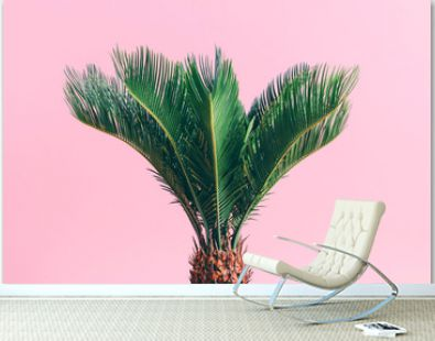 Tropical palm on pink pastel background.