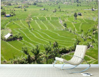 Rice plantations in Indonesia.