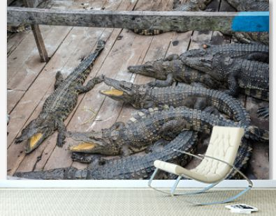 Crocodile farm in the lake in Cambodia