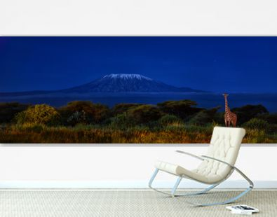 Panoramic, night picture of Mount Kilimanjaro with Masai giraffe in front, snow capped highest african mountain, lit by full moon against deep blue night sky. Amboseli national park, Kenya.