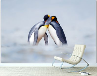 King penguin mating couple cuddling in wild nature, snow and ice. Pair two penguins making love. Wildlife scene from white nature. Bird behavior, wildlife scene from nature, South Georgia, Antarctica.