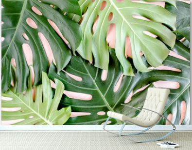 Texture tropical palm leaf Monstera on pink background. Flat lay, top view