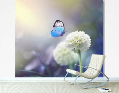 White scope flowers with blue plant background and butterfly