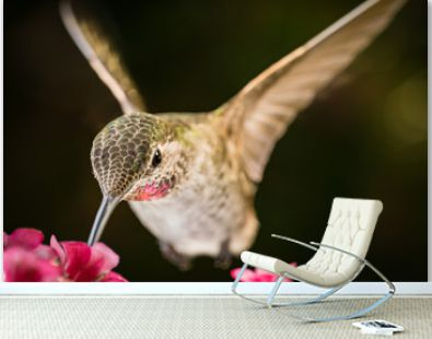 This is a photograph of a hummingbird visits the pink flowers