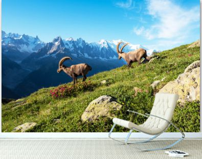 Beautiful mountain landscape with two cute mountain goats in the French Alps near the Lac Blanc massif against the backdrop of Mont Blanc.