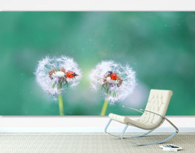 two ladybugs on white fluffy dandelions. beautiful green outdoors scene with lovely ladybugs in summer nature close up. Gentle artistic image of wildlife insects. copy space
