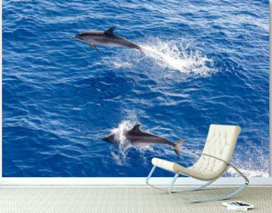 Family dolphins swimming in the blue ocean in Tenerife,Spain