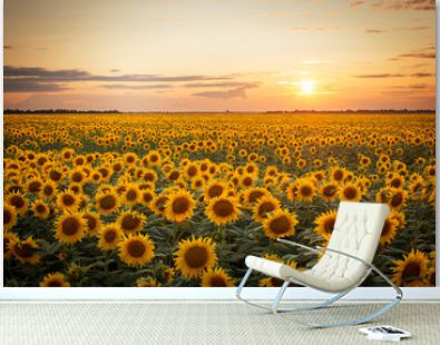 Beautiful sunset over big golden sunflower field in the countryside