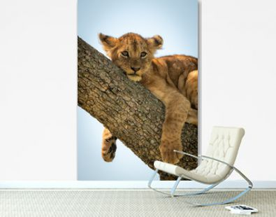 Close-up of lion cub relaxing in tree