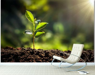small tree growing with sunshine in garden. eco concept