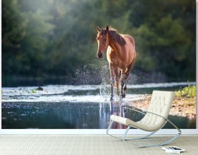 Chestnut horse in river with splash of water
