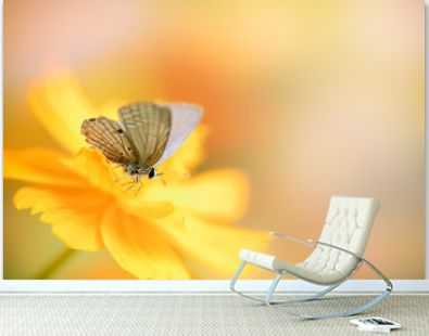 Beautiful nature view of butterfly on blurred background in garden with copy space using as background natural animal landscape, fresh cover page, butterflies day concept.