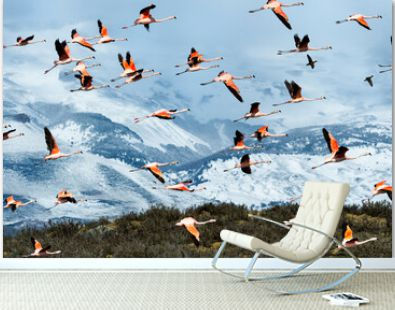 Flock of Chilean Flamingos (Phoenicopterus chilensis), Torres del Paine National Park, Chilean Patagonia, Chile