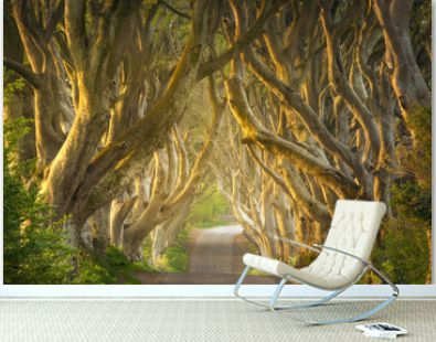 Sunrise light through the Dark Hedges in Northern Ireland (Game of Thrones filmset)