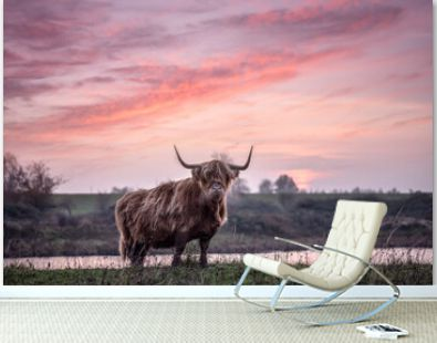 Highland cattle with big horns grazing at the Dintelse Gorzen in the Netherlands