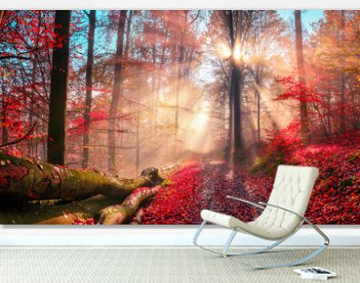 Enchanting autumn scenery in dreamy colors showing a forest path with the sun behind a tree casting beautiful rays through wafts of mist