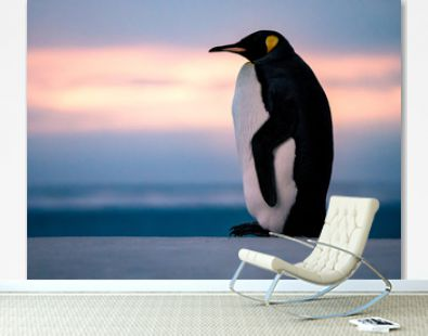 King penguin by the seaside during sunset.