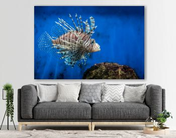 Lion fish and rock