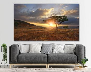 Beautiful landscape with nobody tree in Africa