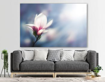 Soft focus image of blossoming magnolia flowers in spring time.