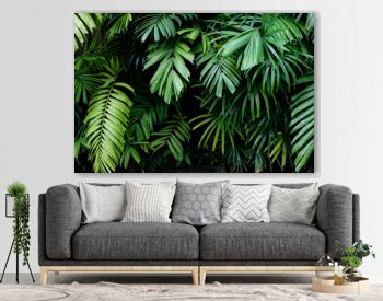 Tropical jungle nature green palm leaves on dark background in a garden