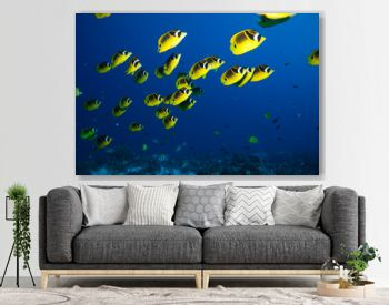 School of bright yellow fish swim past the camera in blue tropical water