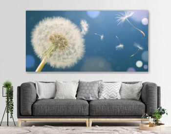 Dandelion releasing seeds. Abstract work. Panoramic.