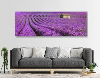 idyllic lavender field with house