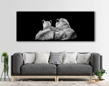 Lion family lying with a black background