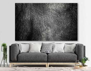background which the structure of hide of elephant is represented on