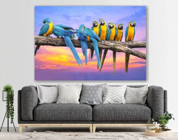 Blue and Yellow Macaw with beautiful sky at sunset